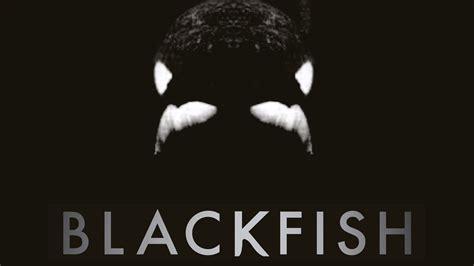 Or Documentary Blackfish Killer Whales At Seaworld Documentary Maker Gabriela Cowperthwaite