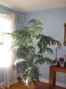 Living Room Plants barb s decorating tips awkward corners