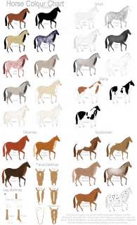 colors of horses colour chart by gaurdianax on deviantart