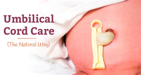 the care of the umbilical cord in newborns how to care for it naturally without using alcohol