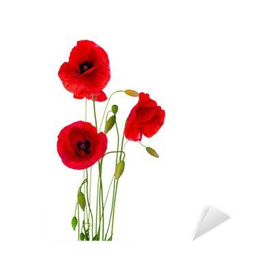 fiore di papavero adesivo fiore di papavero rosso isolato su uno sfondo