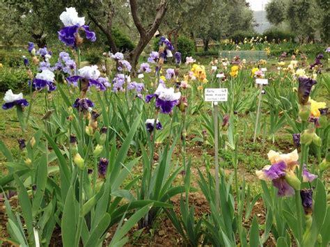 b b al giardino delle firenze firenze al giardino dell iris shakespeare a colazione