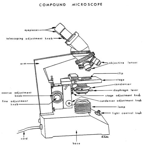 Condenser Adjustment Knob by Use Of The Binocular Microscope Worksheet