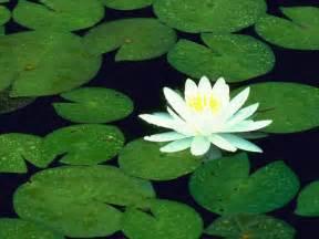 Lotus 123 Free