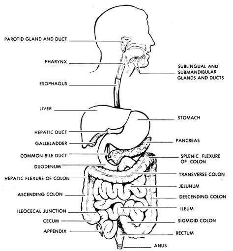 Label Parts Of The Worksheet by Label The Parts Of The Digestive System Worksheet 7