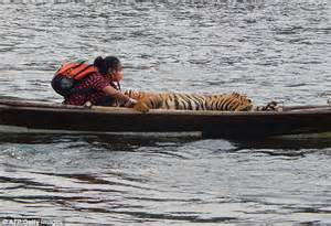 on a boat with a tiger brave vet climbs on to narrow boat with a live tiger in