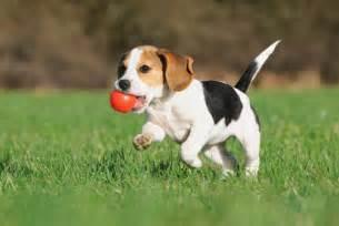 Backyard Agility Course Dog Vaccination Federation Veterinary Hospital