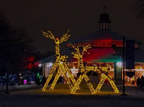 brookfield zoo light show lights shine at brookfield zoo chronicle media