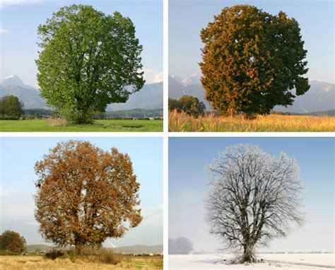 when does spring start met office when does autumn start defining seasons official blog