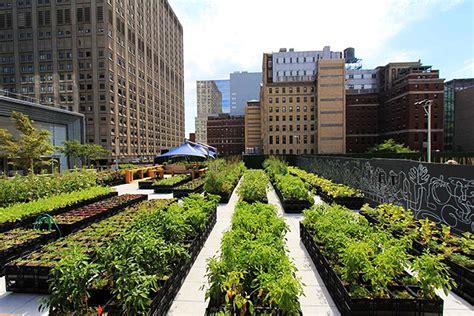 imagenes de jardines urbanos huertos en mi ciudad parte 2