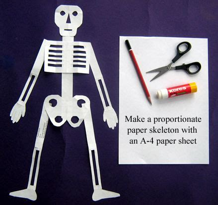 Make A Paper Skeleton - 1000 images about fourth grade science on