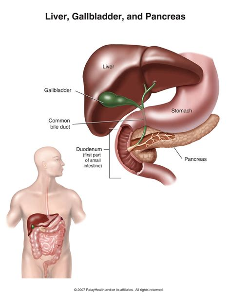 Books To Detox My Liver And Pancreas by Gall Bladder Liver Human Anatomy Charts