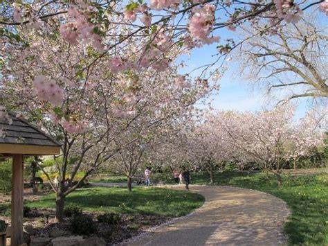 cherry tree wisconsin cherry trees picture of olbrich botanical gardens tripadvisor