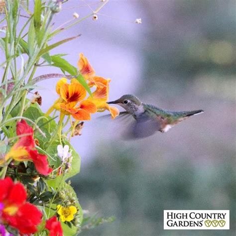 butterfly and hummingbird wildflower seed mix low water