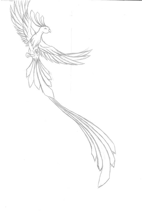 simple phoenix tattoo designs pheonix tattoo work in progres by smiley sniggles d41gkhm