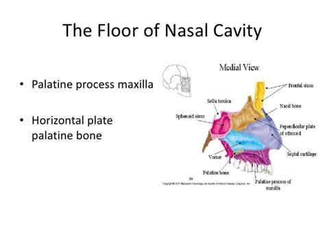 Floor Of The Nasal Cavity by Floor Of The Nasal Cavity Meze