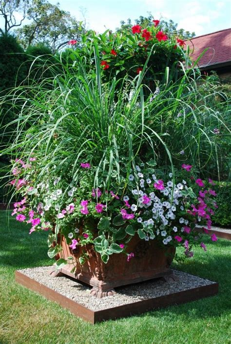 Lemon Grass In Planters by Anti Mosquito Planters And Front Yards On