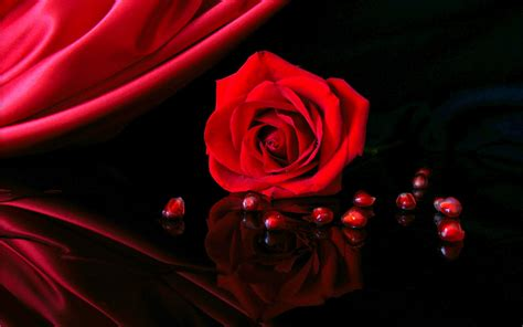 theme red rose download red roses hd wallpapers free download