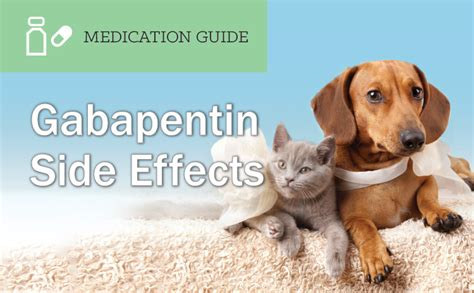 gabapentin for dogs gabapentin side effects