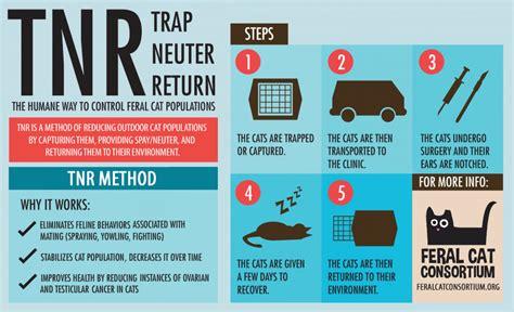 Trap Neuter Return feral cat consortium trap neuter return