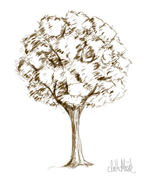 sketched tree tree sketch by thaidaree on deviantart