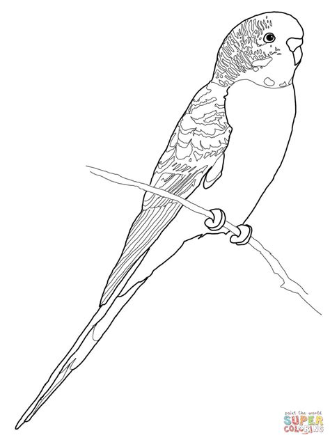 parakeet flying coloring sheet coloring pages