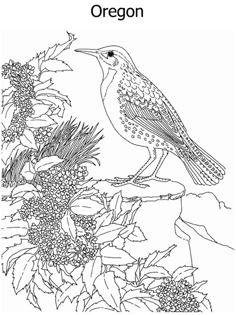 coloring pages of state birds and flowers free oregon state bird coloring pages