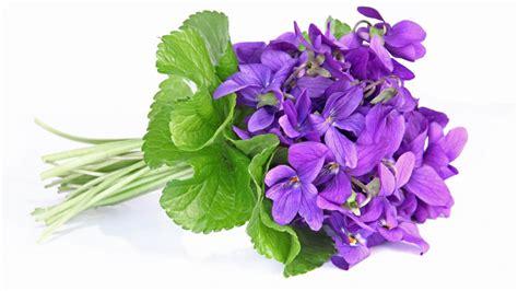 Fleur Violette by Une Fleur De Saison La Violette Comestible Et D 233 Corative