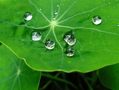 Lotus Leaf Coatings Self Cleaning Paints Lotus Leaf Bio Mimicry In