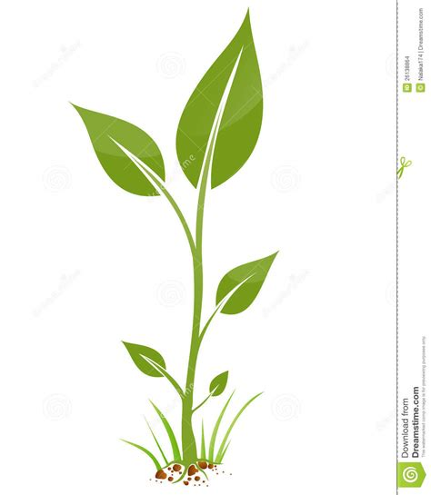 small plant small plant clipart clipground