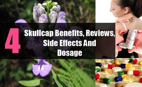 Hair Dryer Benefits And Side Effects skullcap benefits reviews side effects and dosage vitamins estore