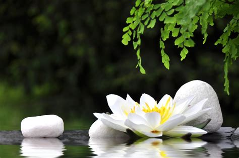 imagenes flores zen raja yoga florida yoga academy