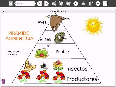 cadenas redes y piramides troficas wikipedia 6 186 a 241 o a escuela n 186 88 b u artigas uruguay aprendiendo