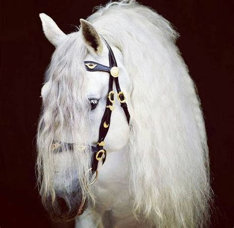 Animal World 1324 1324 best horses and ponies images on pretty