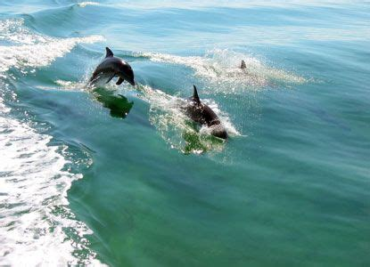 glass bottom boat tours marathon fl guided boat tours fl keys dolphins frolic in the wake of
