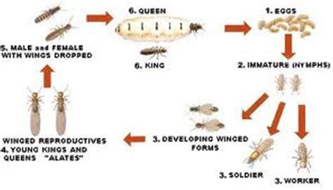 factsheet termites
