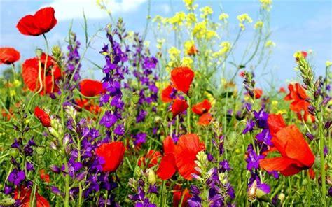 imagenes flores silvestres flores silvestres taringa