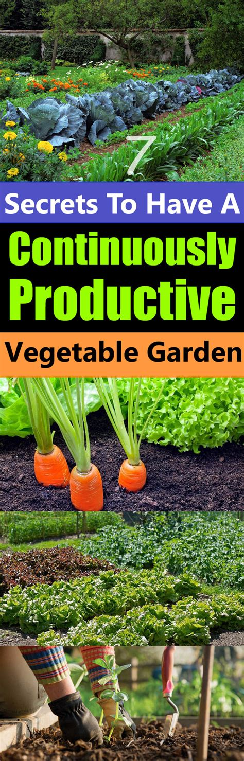 7 secrets to a continuously productive vegetable