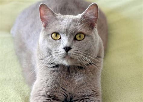 cibo per gatti fatto in casa cibo per gatti fatto in casa risparmiare di mammafelice