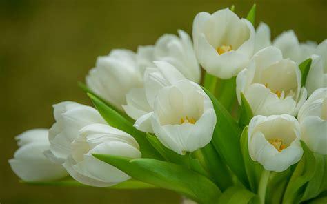imagenes para fondo de pantalla de tulipanes fondo de pantalla tulipanes ramo blanco hd