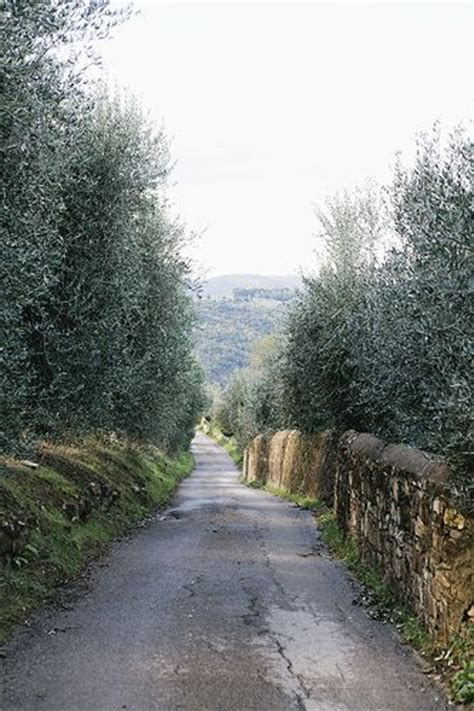 Angela Herzberg Also Search For Road Between The Olive Groves Lastra A Signa Florence Italy Backroads Streets