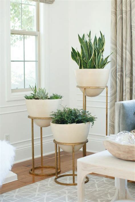 pflanzen für wohnzimmer wohnzimmer dekor pflanzen
