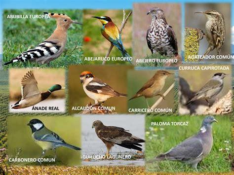 especies de pajaros silvestres pajaros de nuestros cos biodiversidad hasta 50 especies de aves distintas en