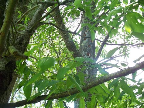 woodpecker tree art photograph by lisa wormell