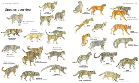 breeds species breeds of cats in the world cats