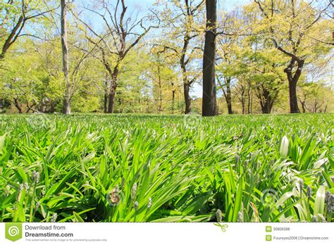 Botanic Garden View View In Botanic Garden Royalty Free Stock Photos Image 30806588