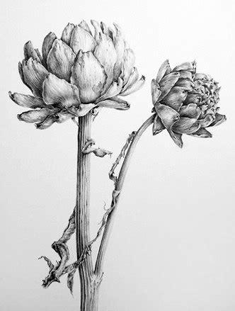 libro botanical drawing using graphite dianne sutherland botanical artist wonderful drawings graphite