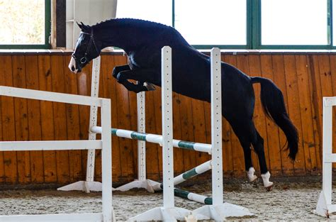 jump free usea free jump evaluation for three year olds added to