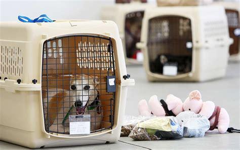 safe  put  dog   plane travel leisure