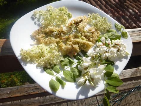 fiori di acacia in pastella fiori d acacia e fiori di sambuco in pastella a nosto